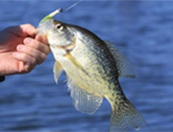 Arkansas Has Six of the Country's Top 50 Crappie Lakes_-4275696280236438681