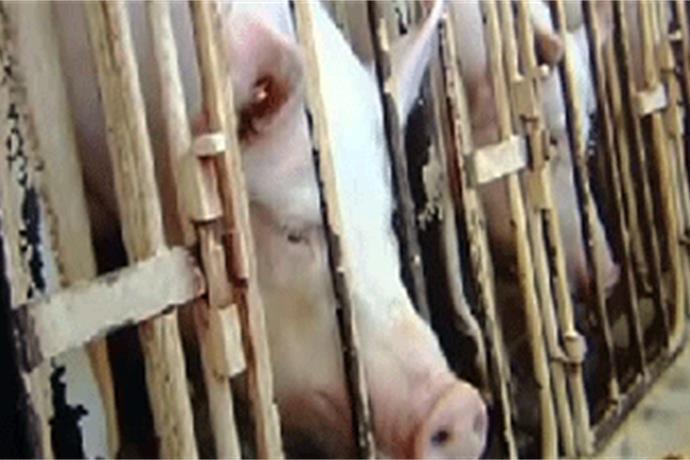 Advocates Fight to Investigate Animal Cruelty Cases_3581666001958224833