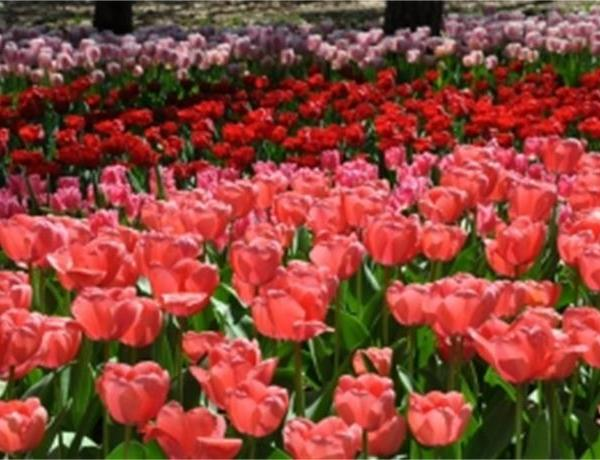 Spring Color in Arkansas_-1224225900125207051