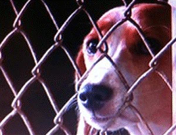 Cabot Animal Shelter Needs Dog Beds_-3723758467695360284
