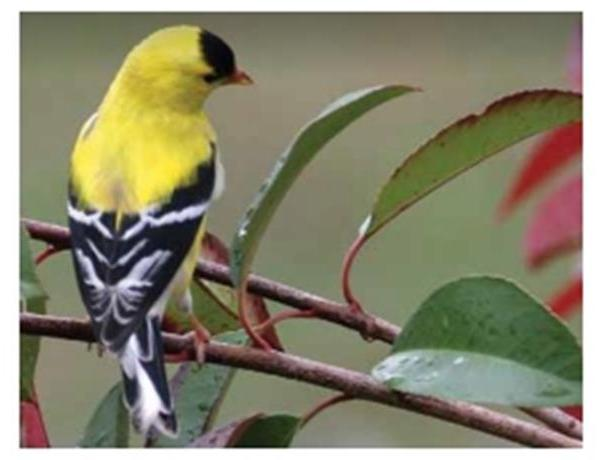 Birdwatching in Arkansas_-1082243167783008496