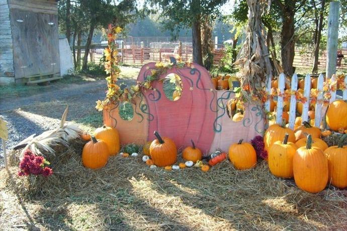 Pumpkin Patch at Quitman_-2478786038221814678