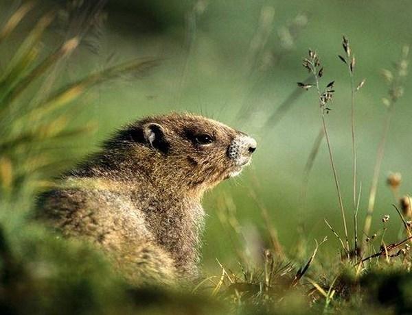 Groundhog_-3270449717010872069