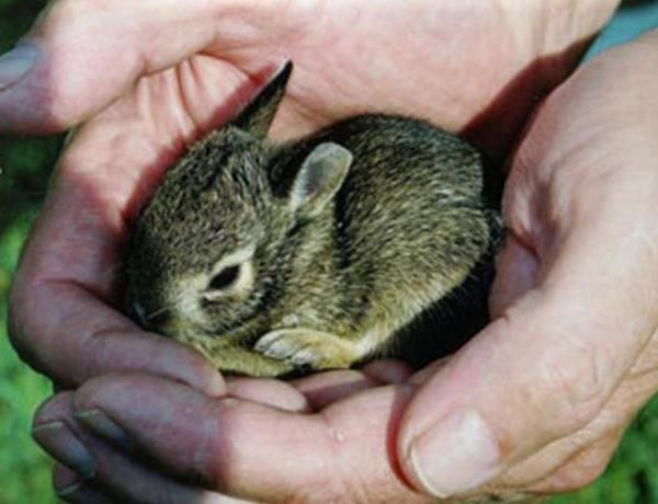 Vet Blair_ Rabbits_-7226631792284840920