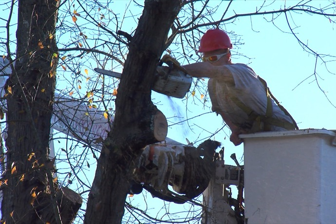 tree removal_-2495047316583920945