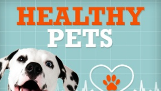 healthy-pets_1429727493902-22965514-22965514-22965514.png