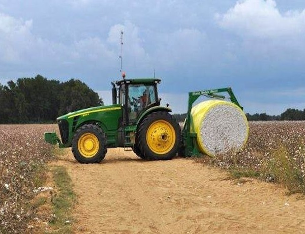 Cotton crop in Arkansas_-8562165153268873982