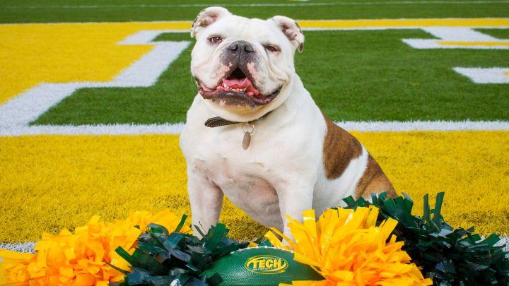 Jerry the Bulldog Arkansas Tech University ATU