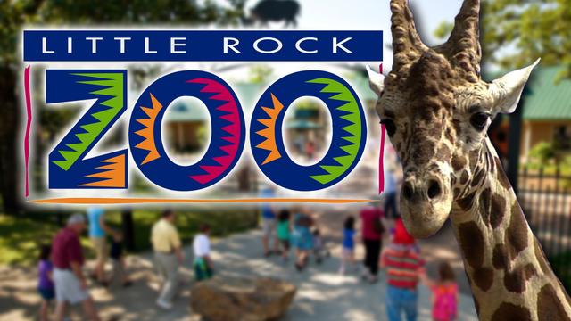 Little Rock Zoo_1495733156471.jpg