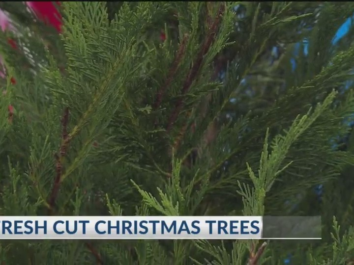 Fresh Cut Christmas Trees Near Me.Why Get Fresh Cut Christmas Trees