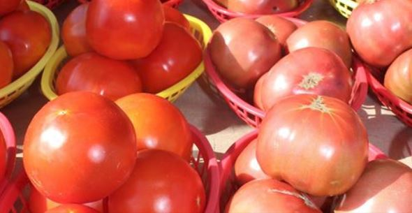 Pink Tomatoes_1537891131906.JPG.jpg