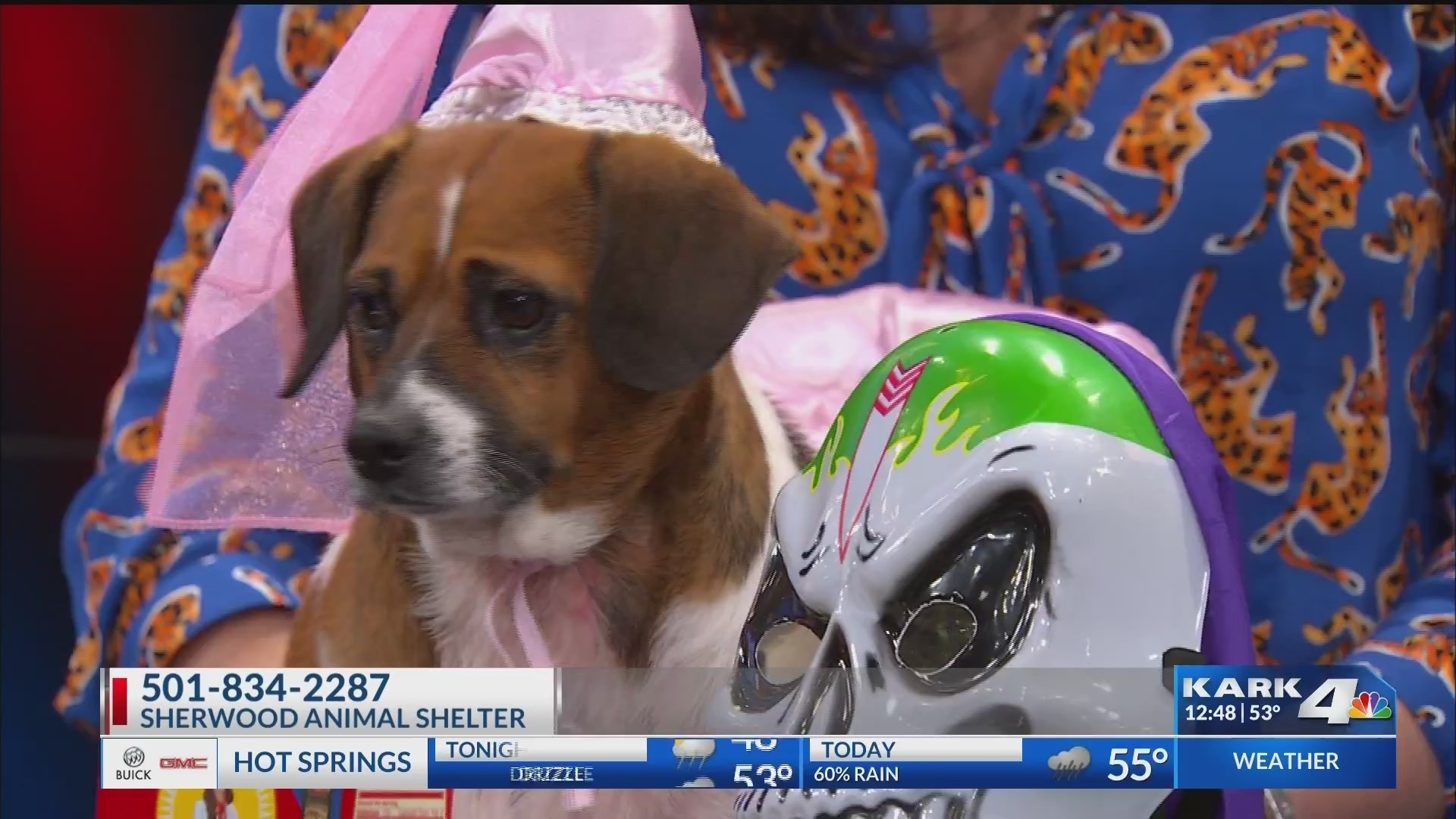 Pet_Safety_for_Halloween_0_20181025201332