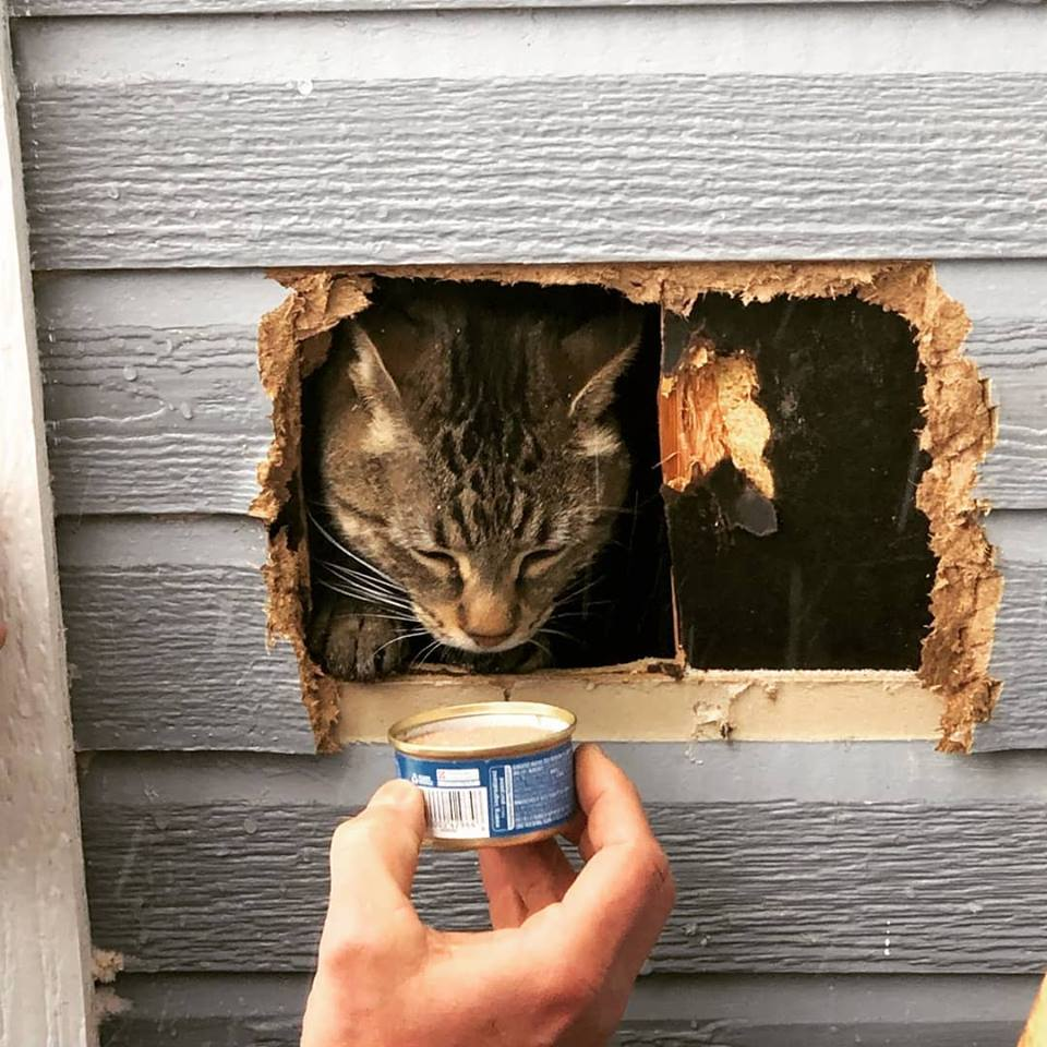 Cat in a Wall_1548359915360.jpg.jpg