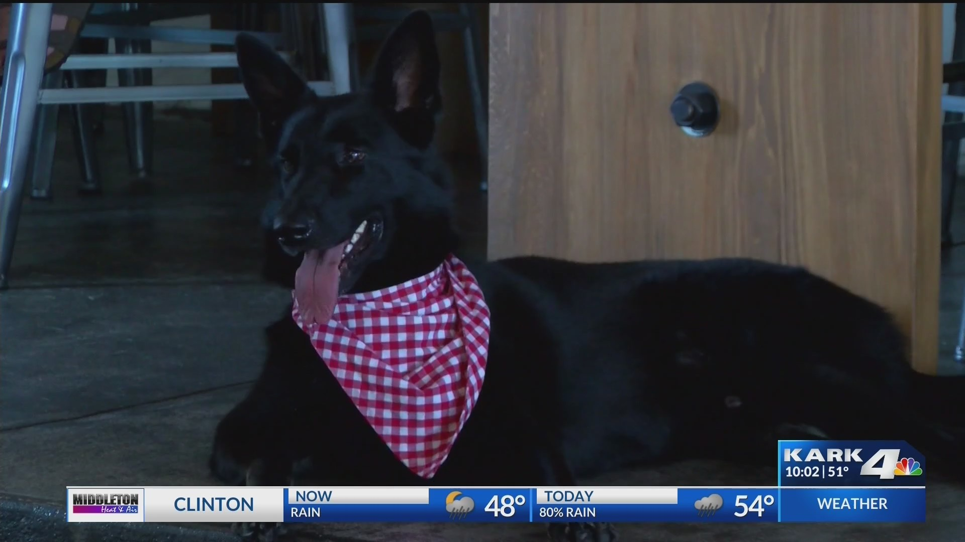 Pulaski County Rule Would Require Pets to be Licensed