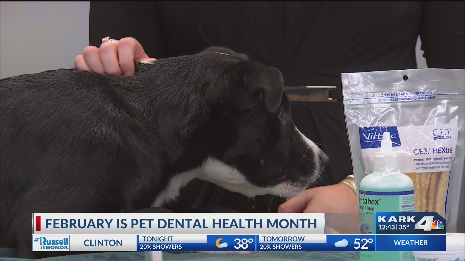 February_is_Pet_Dental_Health_Month_0_20190131194751