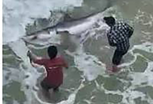 shark caught 2_1551285247192.jpg.jpg