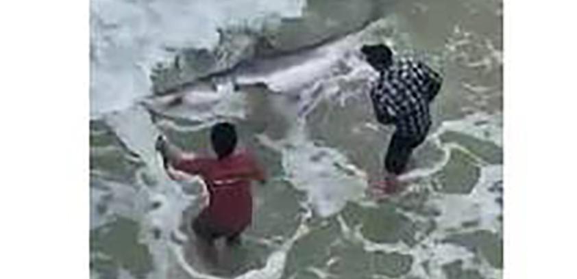 shark caught 2_1551285247192.jpg.jpg