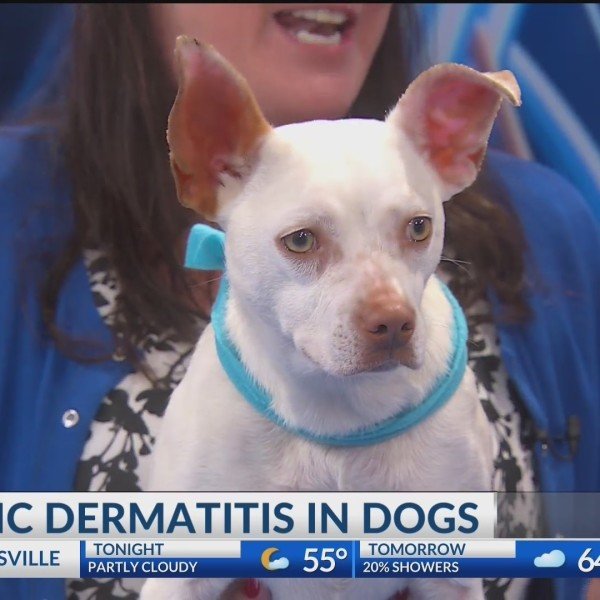 Vet_Blair__Atopic_dermatitis_in_dogs_0_20190510002640