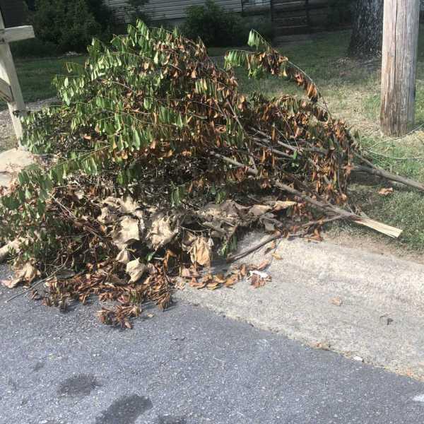 yard waste pick up delayed