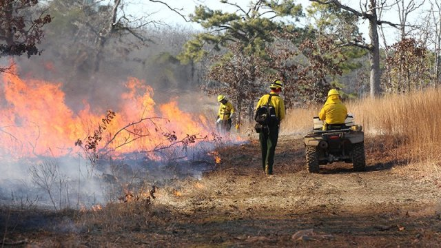 Build better habitat with fire through special workshops