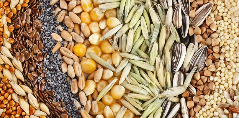 Add these seeds in your diet/foods