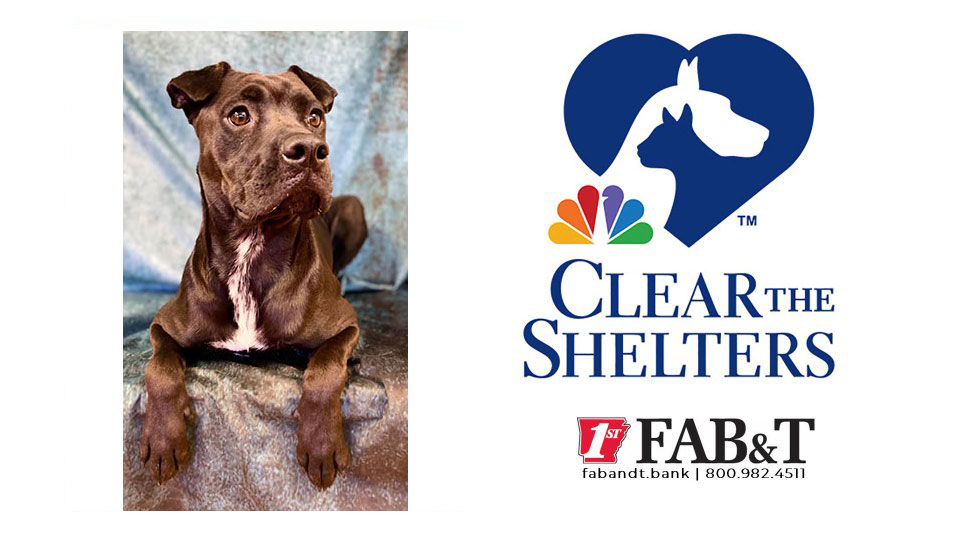 Clear The Shelters Girly Girl Kark
