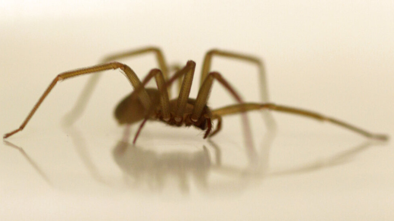 University of Michigan Closes Library After Three Venomous Spiders Are Found in Basement